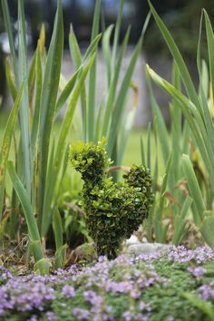 ~ sweet topiary chicken