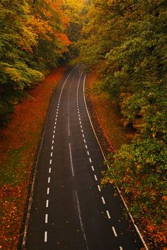 Autumn Road, Arnhem, The Netherlands  photo by mendhak