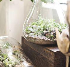 sucullent terrarium