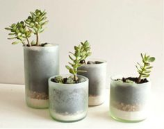 Friday Favorites by Lauren Conrad:  Favorite Earth Day Craft (wine bottles repurposed for potted plants):