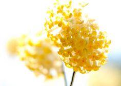 Sunshine ♥ #flower #bright #yellow #flower #colour #inspiration