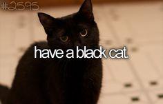 <3 my black cat