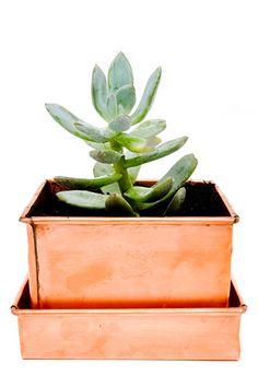 Copper succulent planter