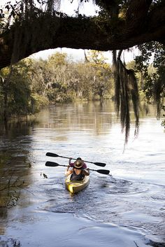 Paddling the Peace River is a trip back in time and a place to see wildlife and the true Florida.