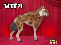 grooming pictures | Epic WTFs, WTF Dog Grooming