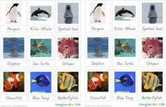 Sea Creature 3-Part Cards