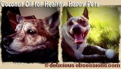 Coconut Oil for Healthy, Happy Pets - Why it's Good and How to Use