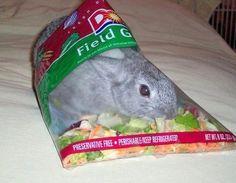 bunny salad