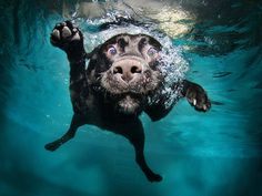 Photos of dogs taken just as they land in water