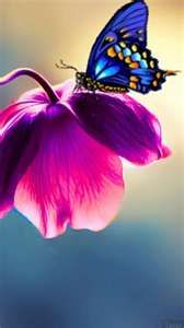 pink flowers, nature, butterflies, blue, travel pictures, purple flowers, vibrant colors, beauti, stained glass
