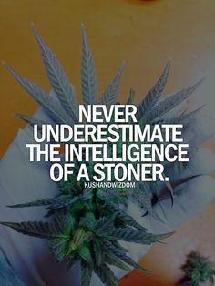 intelligent people are stoners!!