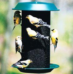 thistl nyjer, bird feeders, thistles, fulli assembl, magnum