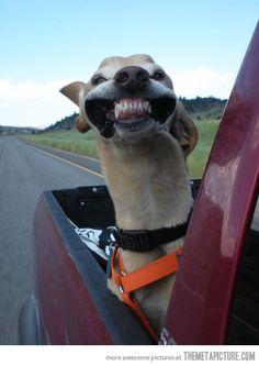 anim, laugh, dogs, stuff, pet, funni, humor, smile, thing