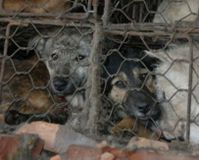 Sign to boycott China  for their gross animal cruelty Only by signing will their be an impact