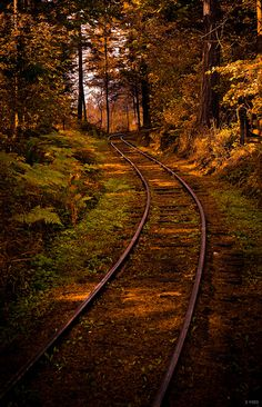 Dappled Sun on the Forest Railway  -  A winding railroad through the forests of the British Columbia Forestry Discovery Museum, located on Vancouver Island.