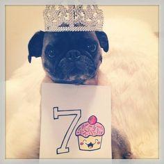 Dog's birthday photo