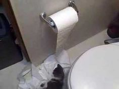 Kittens discover toilet paper