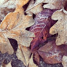 dusted leaves