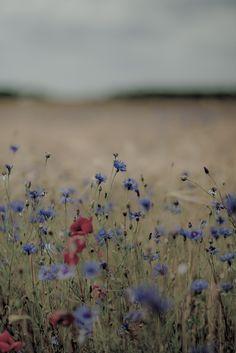 a field of prettiness