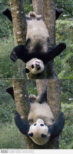 Kung Fu Panda? i love pandas... :D