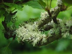 Beautiful lichen