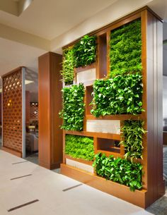 Vertical Garden. More pics & tips, go see http://www.apartmenttherapy.com/indoor-vertical-gardens-and-tips-for-making-your-own-178030?utm_source=feedburner_medium=feed_campaign=Feed%3A+apartmenttherapy%2Fmain+%28AT+Channel%3A+Main%29