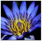 Beautiful favorit flower, beauti