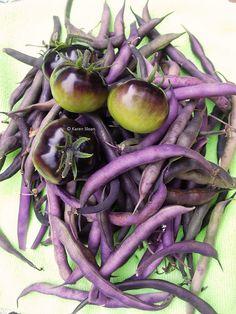 OSU tomatoes and Royal burgundy beans