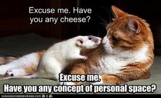 Excuse me.  Have you any cheese?
