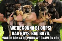 Bad boys. Bad boys. What you gonna do when we gnaw on you.
