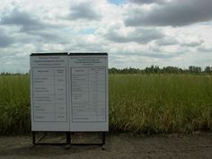 Trials in Europe with Tall wheatgrass