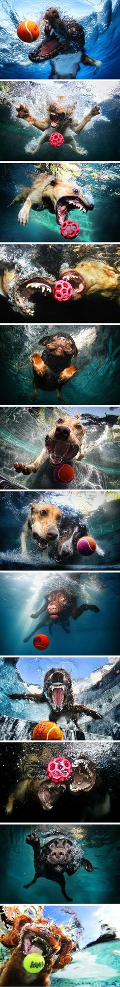 Seth Casteel's photos of dogs diving into swimming pools in hot pursuit of neon tennis balls.