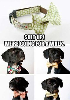 Puppies animals, dexter, dog collars, little puppies, bow ties, bears, pet, christmas, dog bows