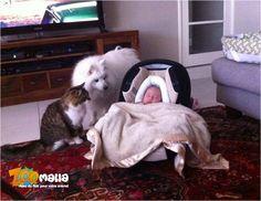 #chien #chat #bébé #animalerie http://www.zoomalia.com