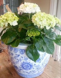 Hydrangea in blue and white...perfect