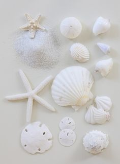 Collectible shells.