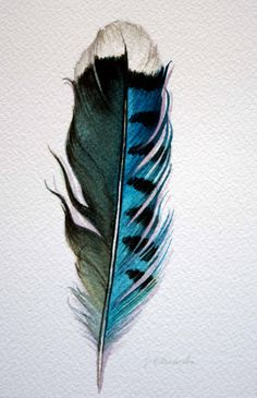 Original Watercolor; Feather Study 178 Blue Jay