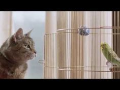 TV ad Cat and Budgie...