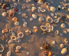 Sanibel Island - shells everywhere