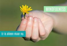 Mindfulness Training (8 bijeenkomsten)