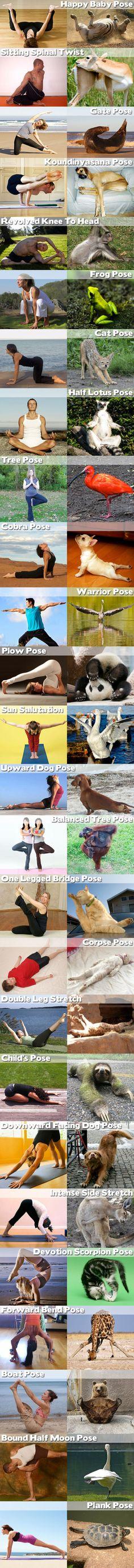 Funny Animal Yoga – 28 Pics