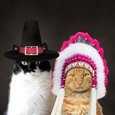 thankgiving cats on pinterest thanksgiving funny