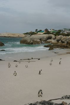 ✮ Simonstown, South Africa