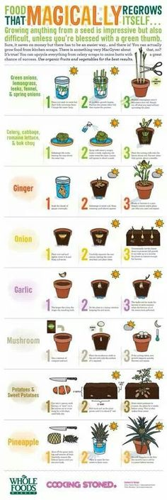 food that regrows, plant, kitchens, foods that regrow, kitchen scrap, growing food, regrow food, magic regrow, garden