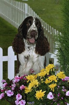 keeping dogs out of flower beds