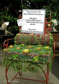Succulent Chair Container