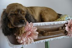 Upcycled Suitcase Pet Bed #DIY #decoracion #vintage #maletas antiguas #repurposed #upcycled