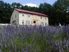 Peace Valley Lavender Farm, Bucks County