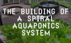 The building of a $1,200 spiral aquaponics system.