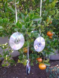 Upcycled CD's: Recycled Garden Art, Bird/Deflectors/Pest Control